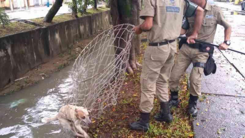 Cachorro é resgatado dentro de rio na Baixada Fluminense, RJ