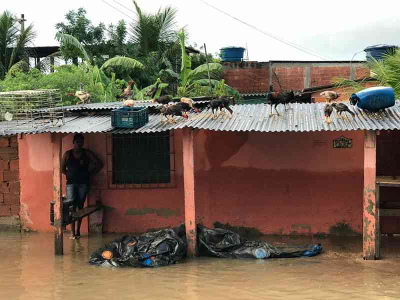 Para proteger da enxurrada, moradores da zona oeste do Rio colocam animais no telhado das casas