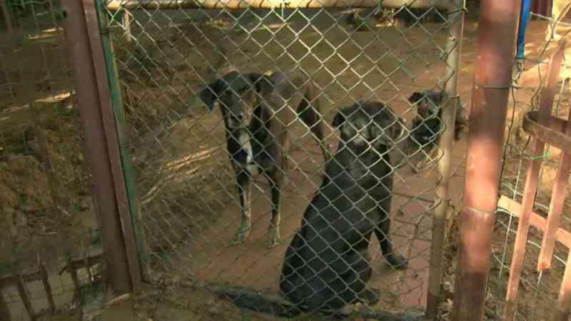 Deslizamento de terra atinge abrigo que atende a mais de 100 animais na zona oeste do Rio