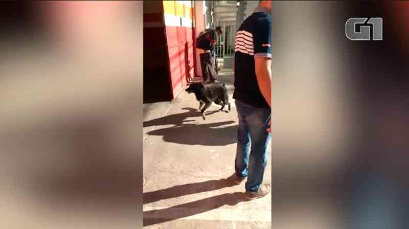 Cão é resgatado de rio em Petrópolis, RJ, e abana o rabo eufórico para agradecer, observa morador em vídeo