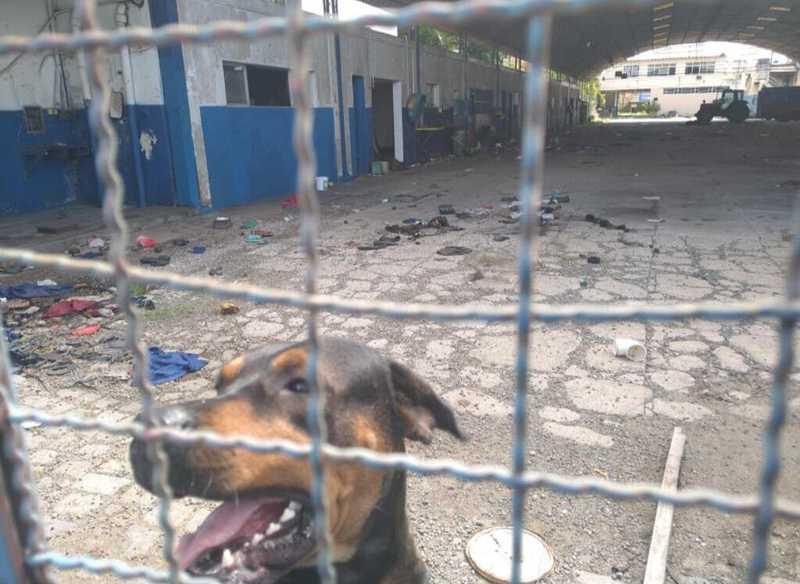 Cachorro vítima de maus-tratos é resgatado dentro de antiga garagem de ônibus em Campos, no RJ