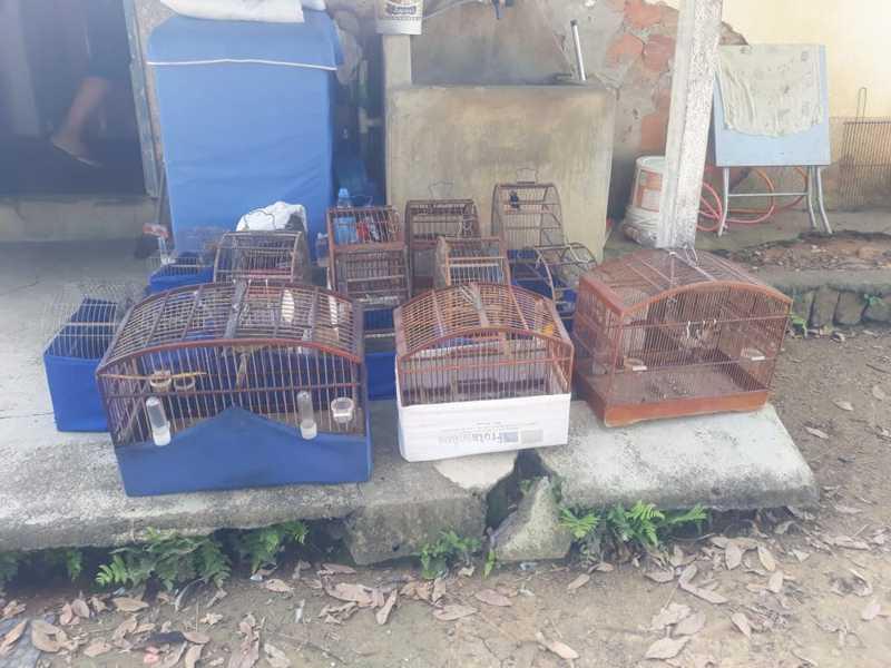 Animais silvestres são apreendidos em Rio das Flores, RJ