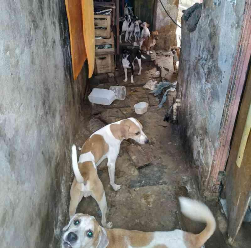 Cães em situação de maus-tratos são resgatados em Santo Antônio de Pádua, no RJ
