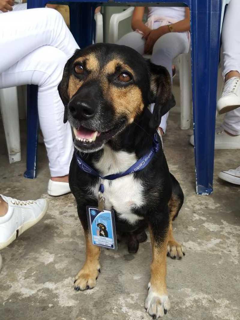 Com fama de 'chorão e escandaloso', cachorro ganha emprego e até crachá em faculdade de Valença, RJ