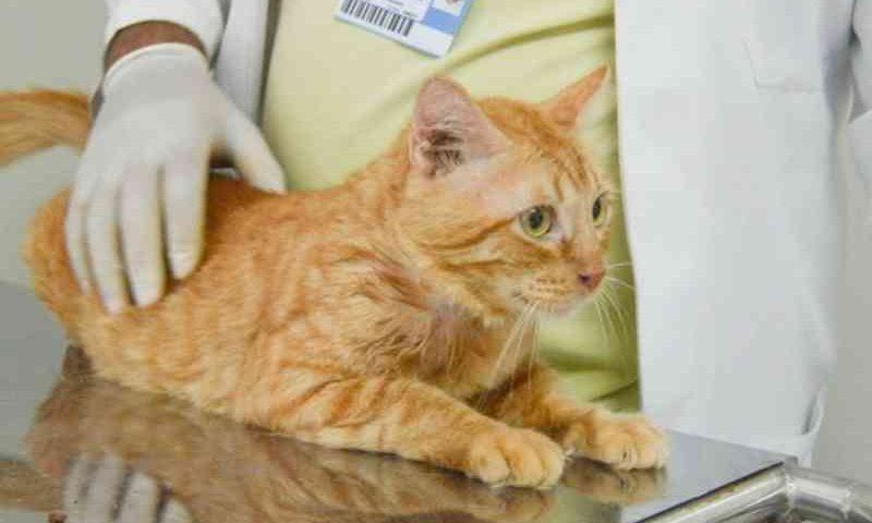 Cadastro para castração gratuita de cães e gatos tem início em Natal (RN) nesta quarta (3)