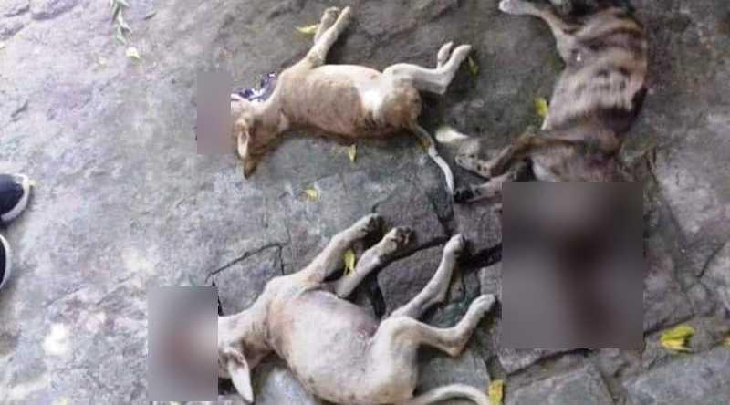 Três cachorros são encontrados mortos em Janduís, RN