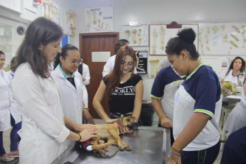 Parceria para confecção de próteses para animais em Rondônia ajuda nas adoções