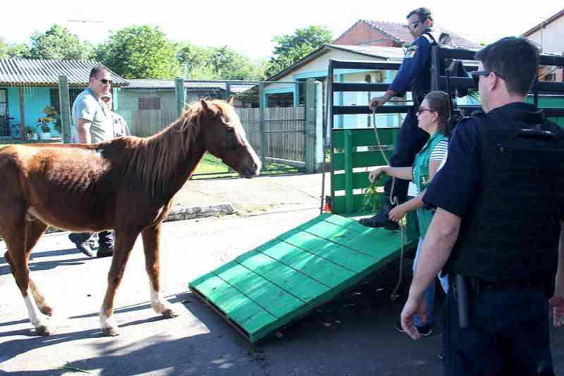 Cavalo agredido constantemente é resgatado em Esteio, RS