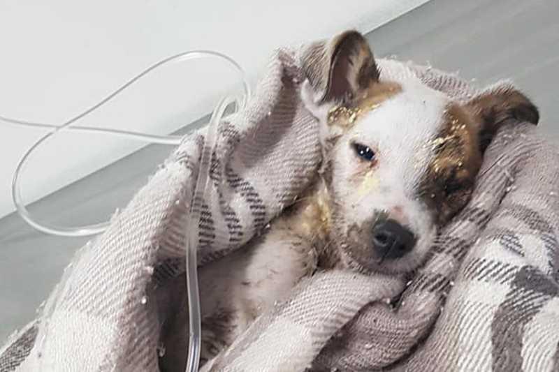 Filhote abandonado em sacola morre um dia após resgate, em Santa Cruz do Sul, RS