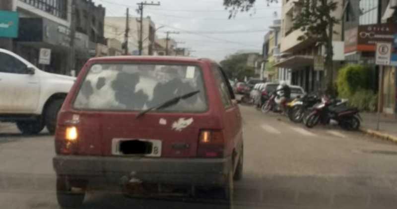 Motorista é flagrado transportando vaca no porta-malas de Fiat Uno em Camaquã, RS
