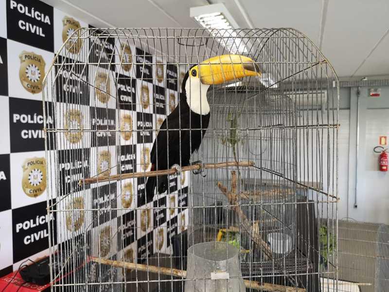 Homem que estava com os tucanos vai responder ainda pelo crime de maus-tratos contra animais. — Foto: Polícia Civil/Divulgação