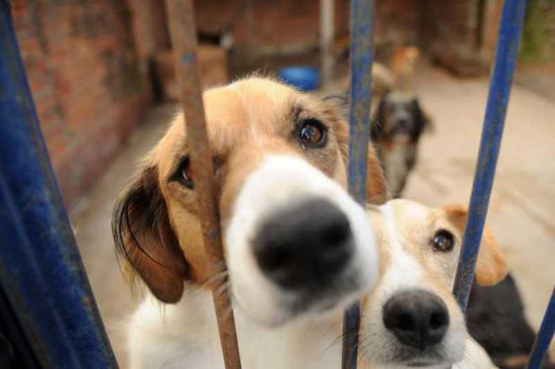 Bem-estar e proteção de animais é tema de audiência pública em Caxias, RS