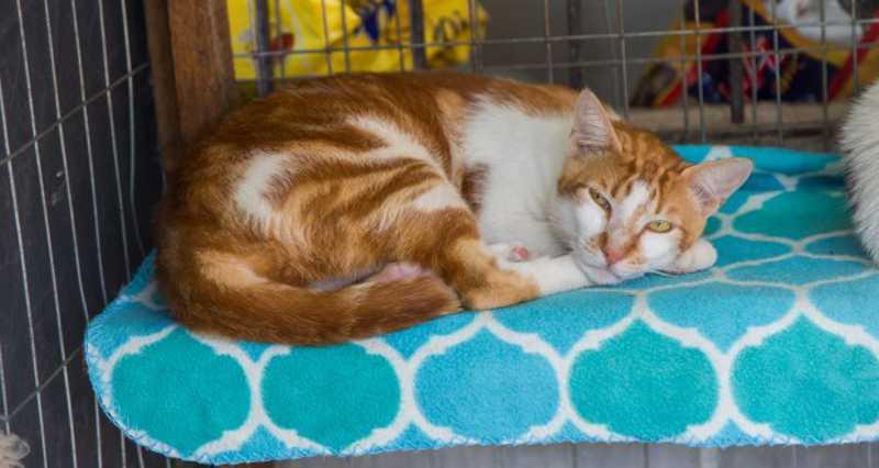 Canil Municipal realiza a castração de 127 gatos em Gravataí, RS