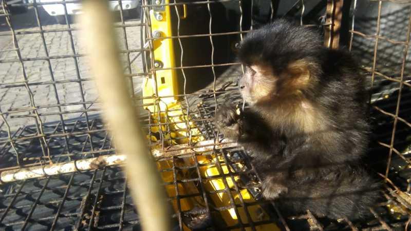 Animais silvestres são apreendidos no bairro Santo Antônio, em Veranópolis, RS