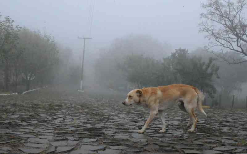 Vários animais foram envenenados nesta semana em Rio Maina, no Sul do Estado