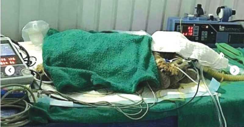 Frederico morreu internado no veterinário