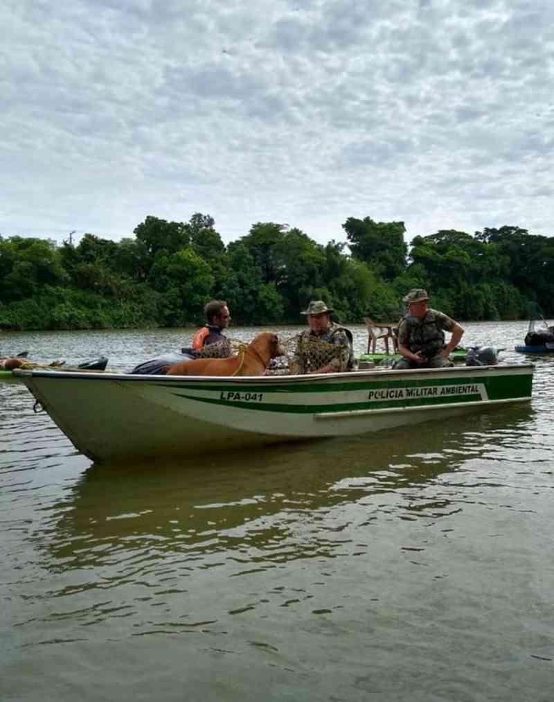 Cachorro é encontrado amarrado e abandonado às margens de rio no Sul catarinense