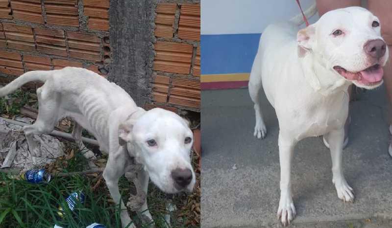 Um mês após resgate, cadela se recupera e é colocada para adoção em Florianópolis