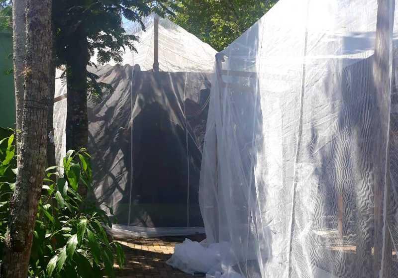 Projeto Bugio usa mosquiteiros para proteger animais da febre amarela