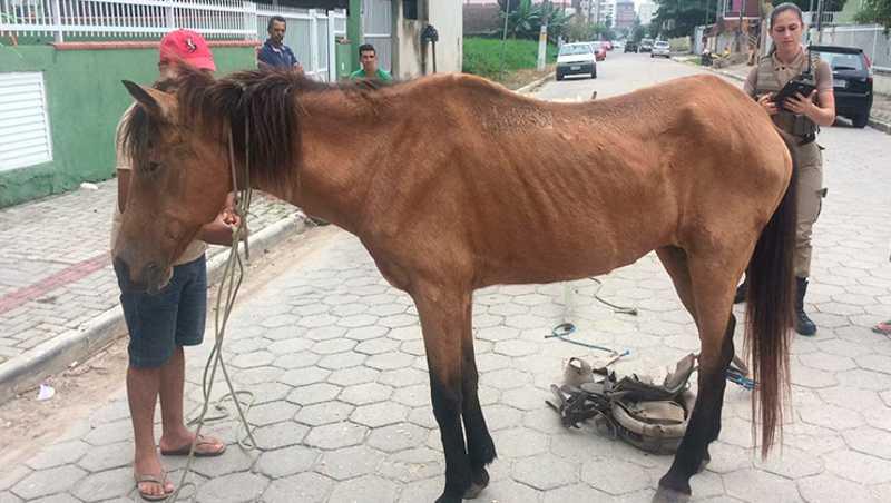 Cavalo é resgatado após sofrer maus-tratos pelo tutor em Itapema, SC