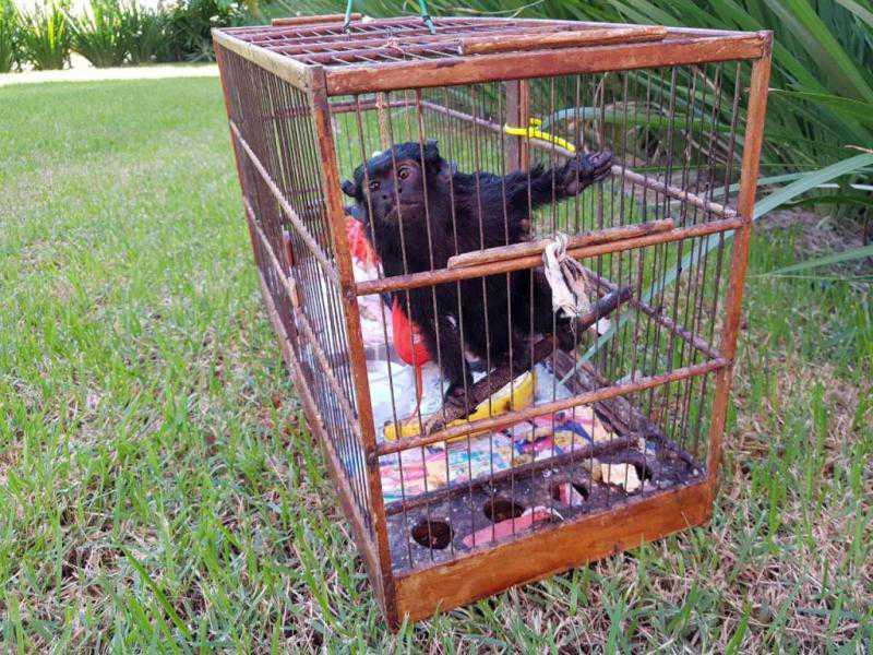 Macaco domesticado é abandonado em unidade dos bombeiros de Joinville, SC