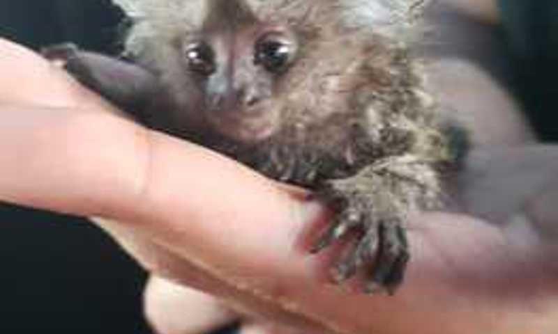 Equipe de fauna da Adema já resgatou 400 animais silvestres este ano em Sergipe