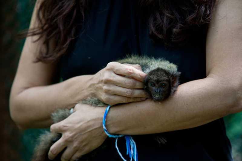 Macaco guigó que vivia em cativeiro é reintroduzido à Mata do Junco, em Capela, SE