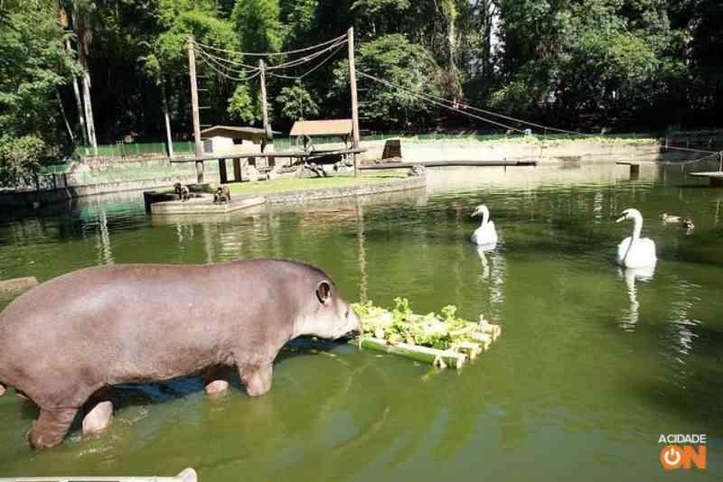 Bosque dos Jequitibás em Campinas (SP) não terá mais animais em cativeiros