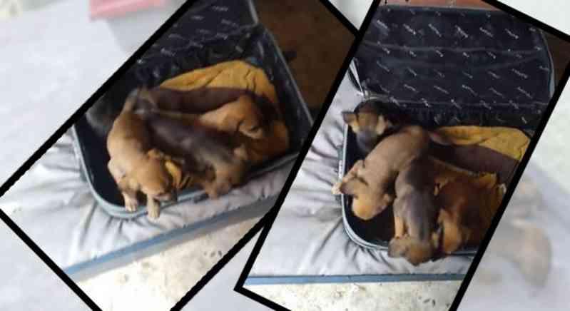 Homem encontra mala fechada com quatro filhotes de cachorro em Cotia, SP