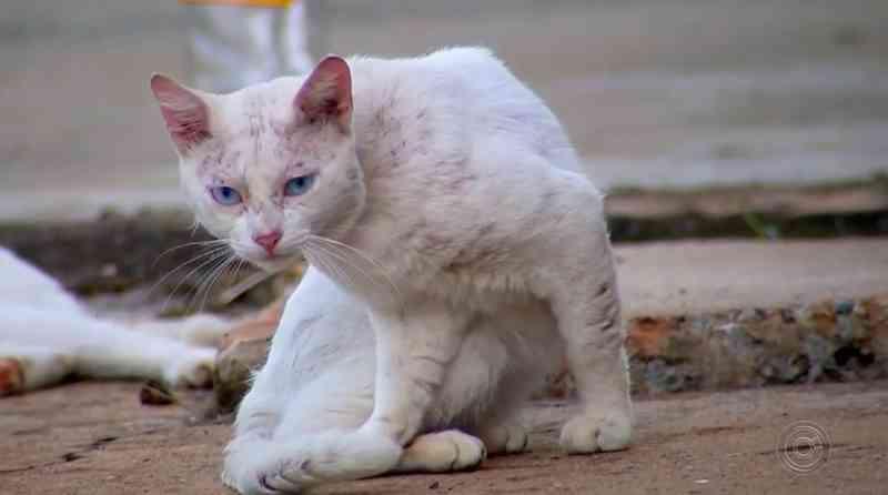 Moradores se preocupam com abandono de mais de 10 gatos em casa de Itapetininga, SP