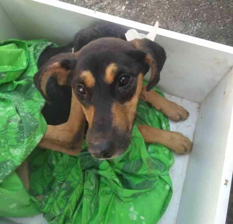 Cadela é abandonada em caixa fechada com parafuso em estrada de Jundiaí, SP
