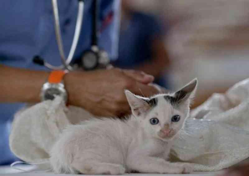 2º Hospital Veterinário Municipal de Osasco 'será o maior do estado', diz diretor