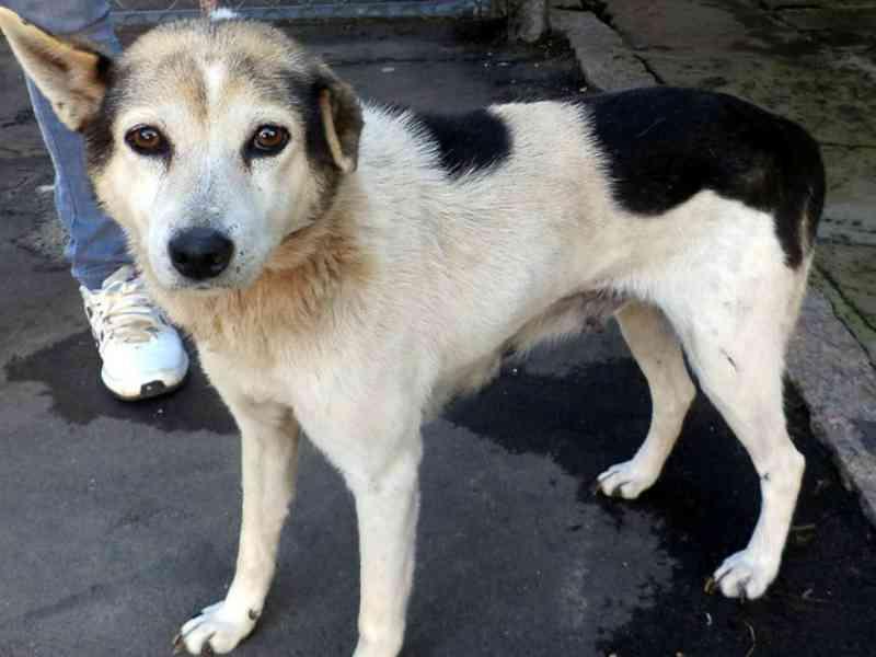 Quem abandonar animais em Osasco (SP) pagará multa de R$ 3 mil