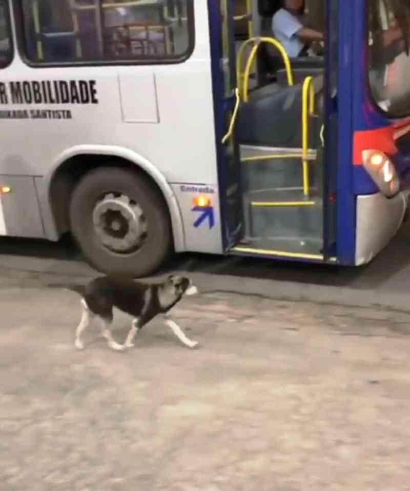 Motorista faz 'pit stop' em posto para dar comida a cachorro em SP; vídeo