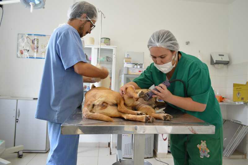 Cadastro para castração gratuita de cães começa nesta segunda em Arujá, SP