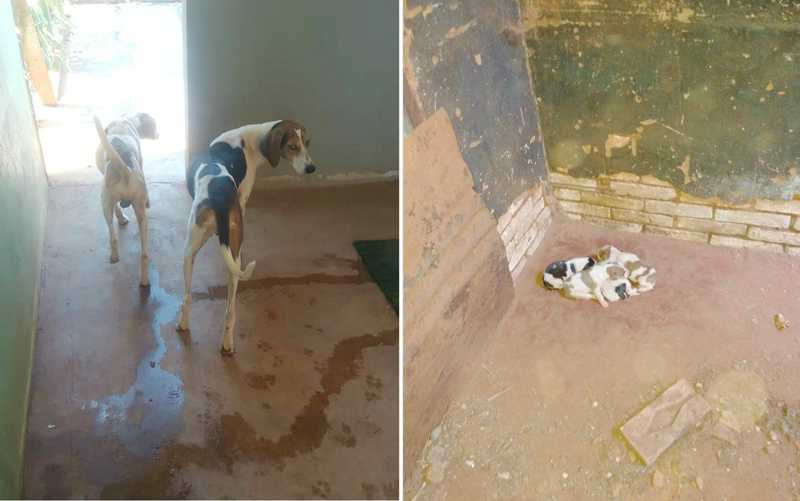Pedreiro é multado em R$ 21,5 mil por deixar 7 cães sem comida em meio a fezes e urina em Barretos, SP