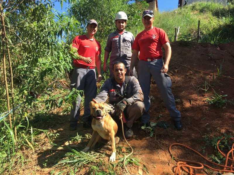 Cão cai em poço de dez metros e é resgatado por bombeiros em Bragança Paulista, SP