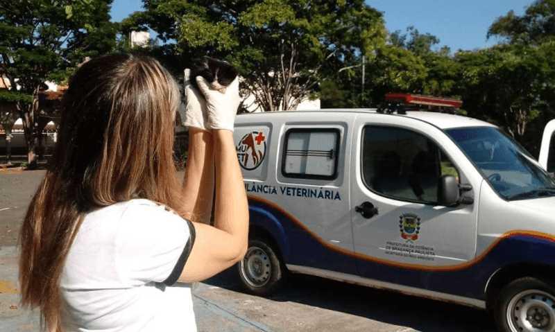 SAMUVET completa um mês de atividade em Bragança Paulista (SP) realizando os resgates de animais doentes e machucados
