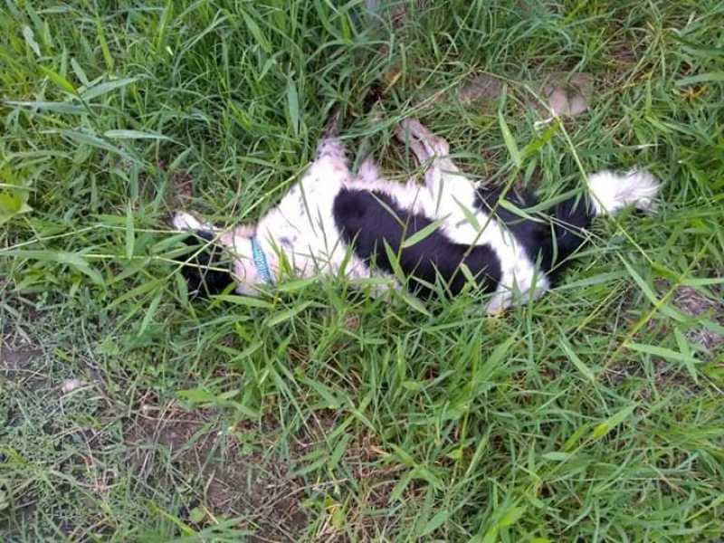 10 cães morrem envenenados em Capivari de Baixo, SC