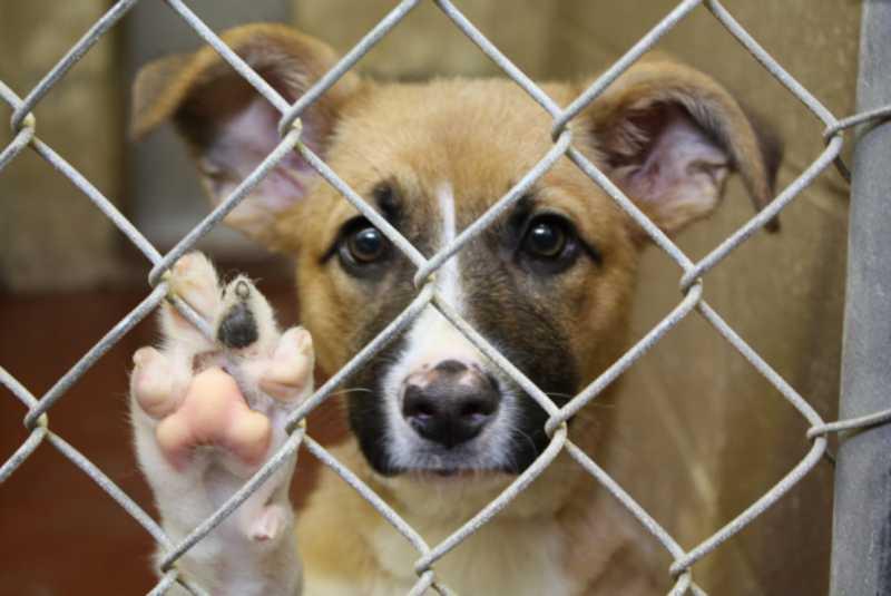 Cosmópolis (SP) registrou 200 resgates de animais em situação de maus-tratos