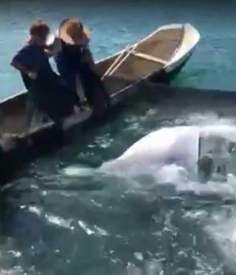 VÍDEO: Raia presa em rede é resgatada por pescadores em Ilhabela, SP