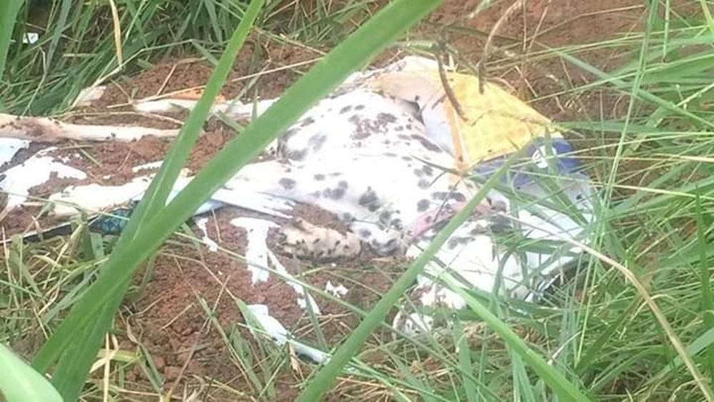 Cachorro é enterrado vivo pelo tutor e amigo em Jacareí — Foto: Arquivo Pessoal