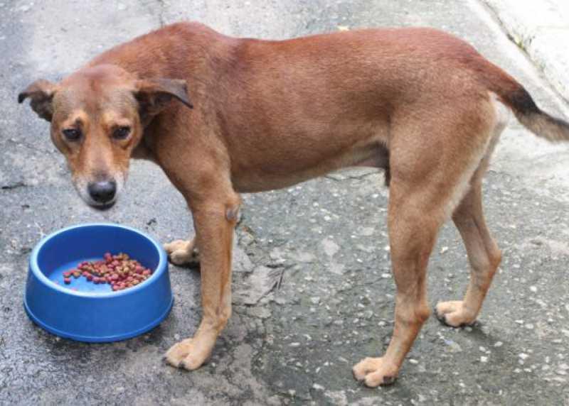 Após liminar, Jacareí (SP) ainda não recolheu animais de rua