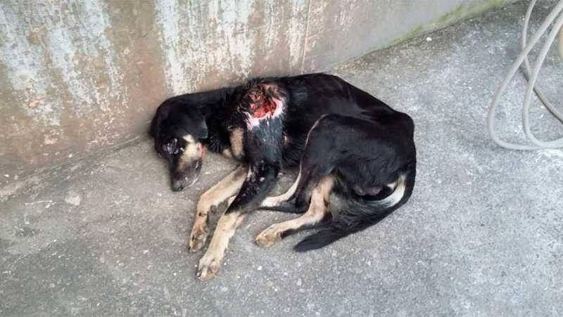 SOS pede socorro para resgatar animais vítimas de maus-tratos em Jundiaí, SP