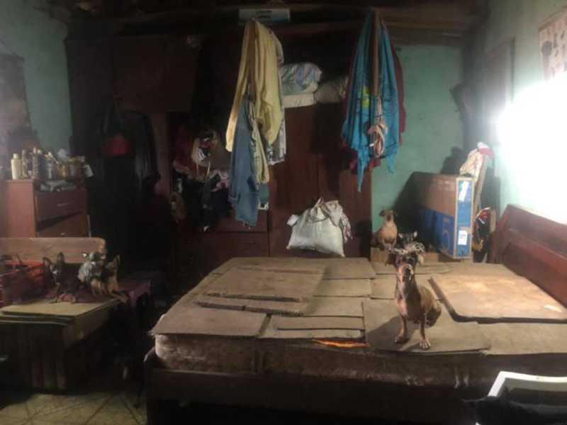 40 cães vítimas de maus-tratos são resgatados em Osasco, SP