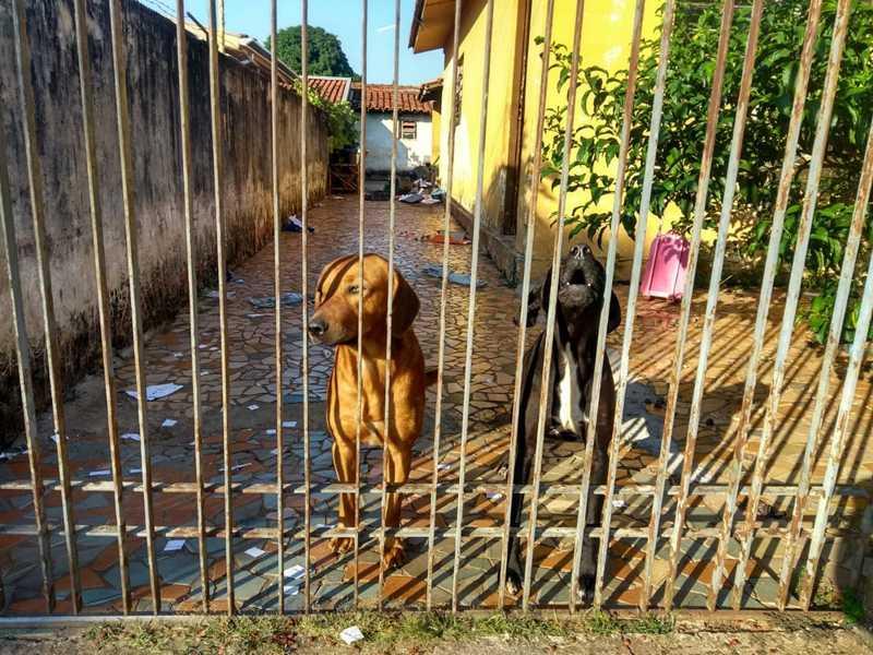 Polícia Ambiental de Pirassununga (SP) encontra cães abandonados e multa tutor em R$ 6 mil