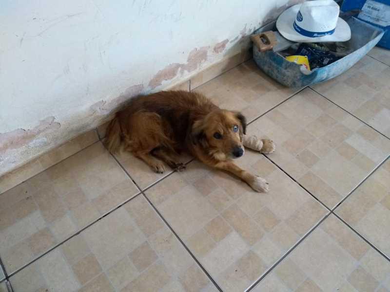 Polícia Ambiental resgata cachorro vítima de maus tratos em Pirassununga — Foto: Polícia Ambiental de Pirassununga/Divulgação