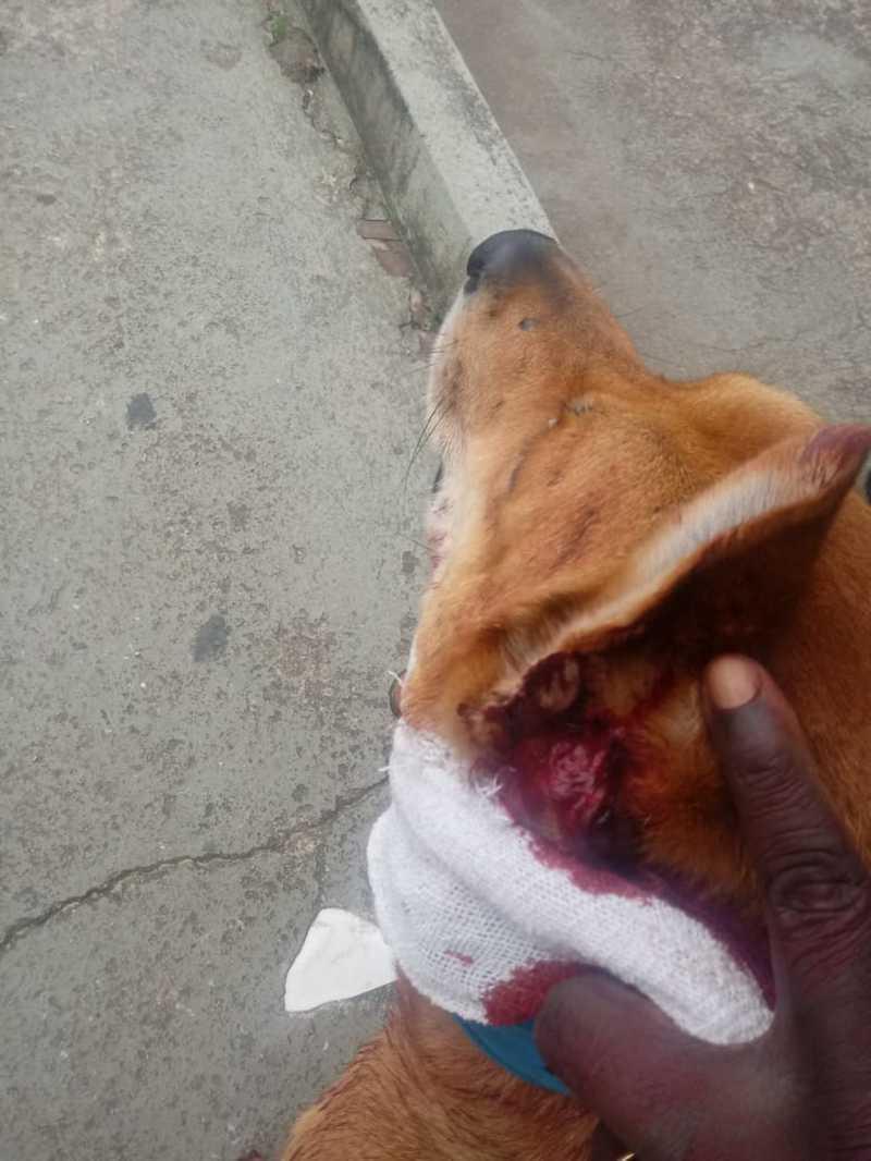 Cão é esfaqueado no pescoço durante tentativa de roubo em Praia Grande, SP — Foto: Divulgação/Guarda Civil Municipal