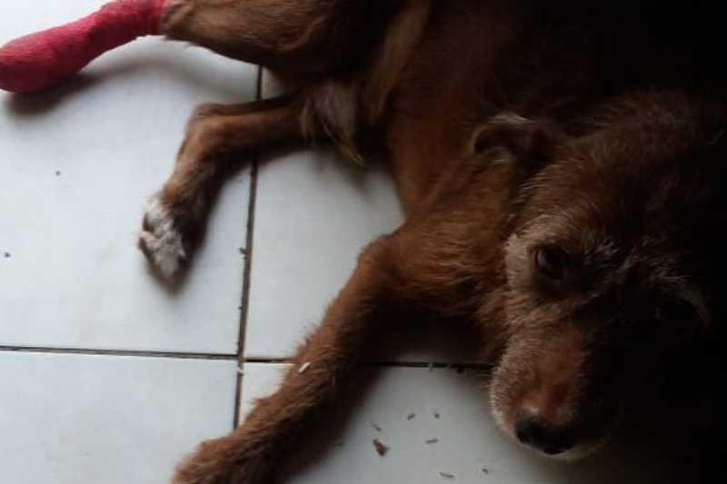 Motorista atropela cachorro de propósito e foge em Praia Grande, SP