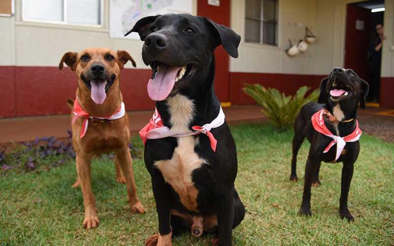 Projeto acolhe animais abandonados próximos à obra em Ribeirão Preto, SP